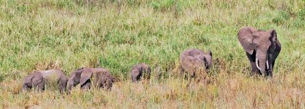 _E7A8269 Baby elephants in the grass web ready