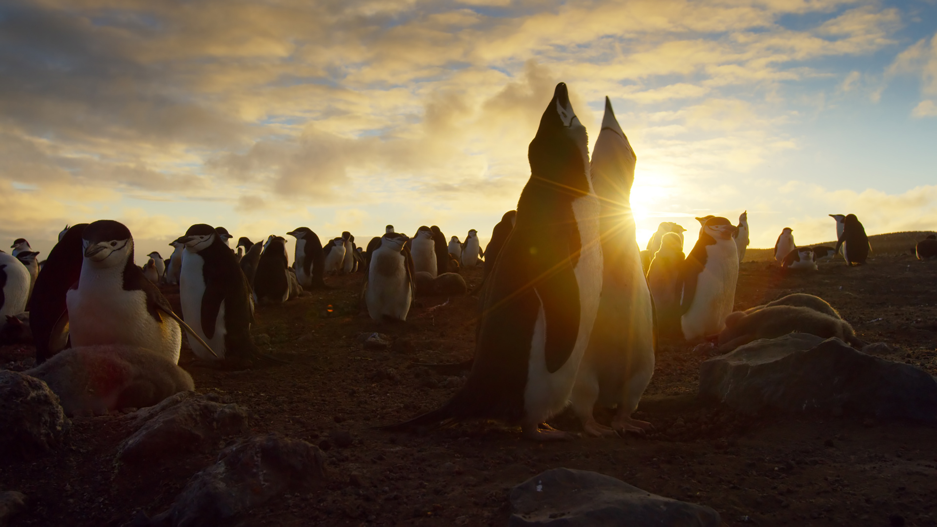 Dish To Deliver Bbc America S Stunning Planet Earth Ii