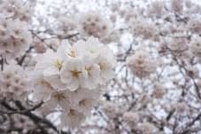 Kanazawa-DSC_6751-b-kl