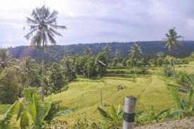 Nach-Padangbai-DSC_7761-b-kl