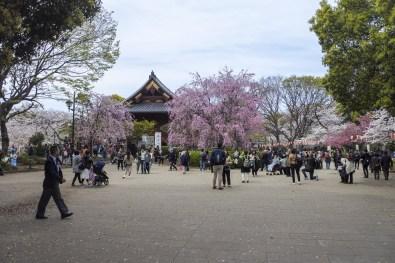 Tokyo-DSC_6923-b-kl