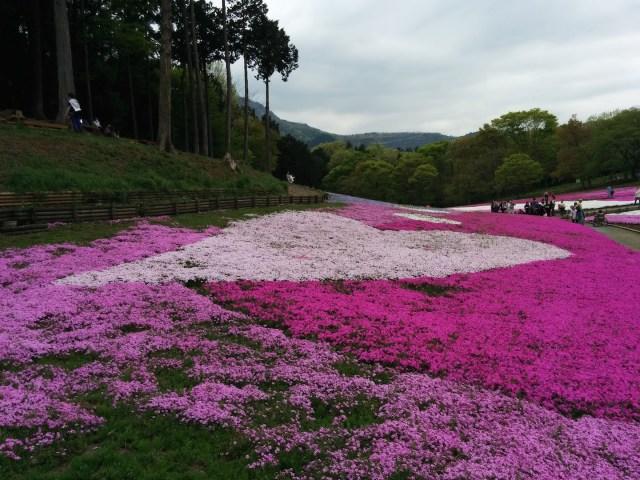 芝桜 ハートマーク