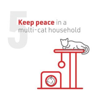 6_Cat2Vet-2021-5TipstoReduceStress-Social