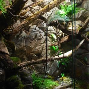 Physignatus Habitat 150x240x80