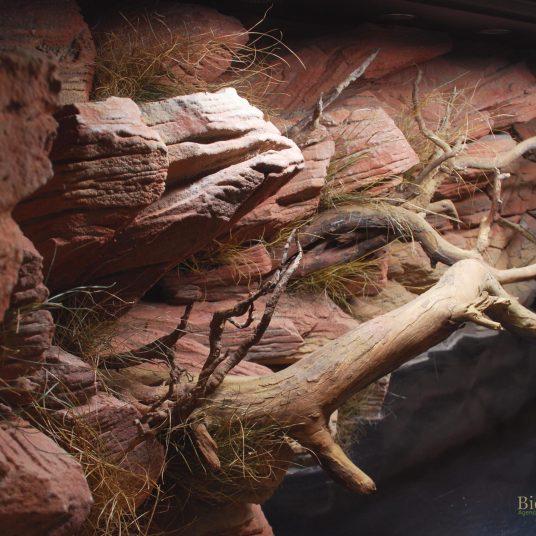 Terrarium désertique Morelia bredli 150x70x70 cm