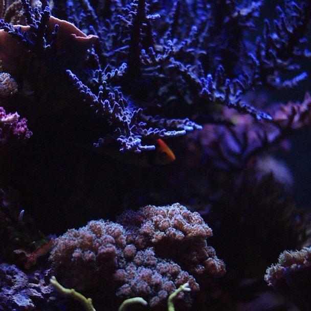 Sea Life MOA