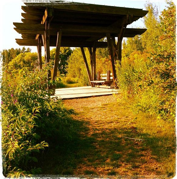 Spring Peeper Meadow 2