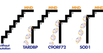 Steps to understanding MND