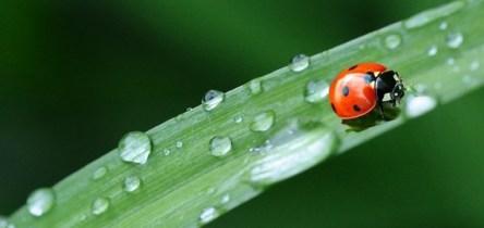 ladybug-574971_960_720 (2)