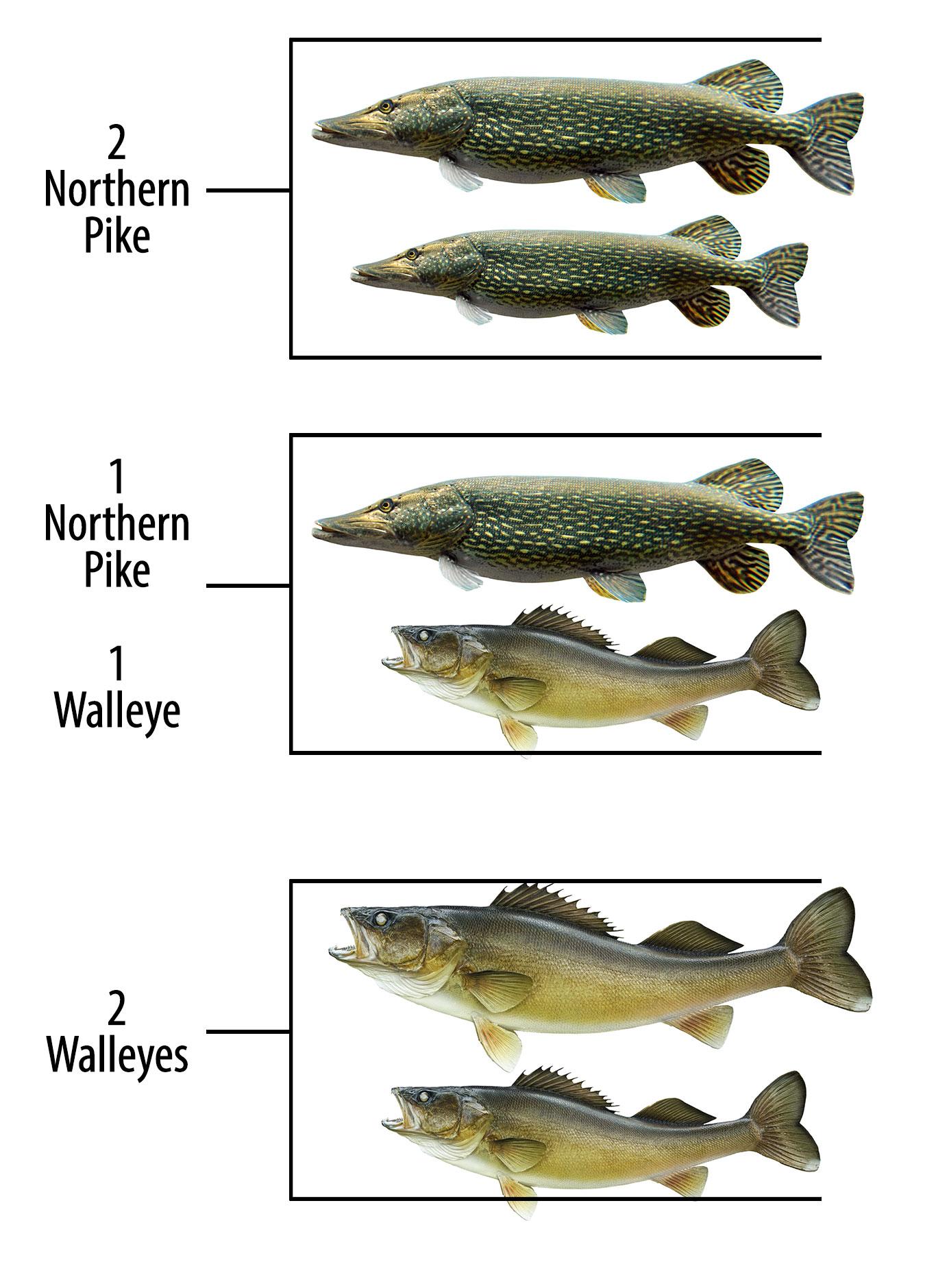 2021 Opener Tournament Fish