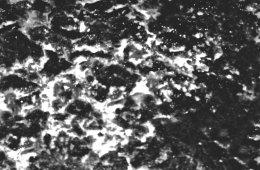 Mørk Pareidolia