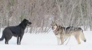 dt_deerkillingdogs_MAR22_14