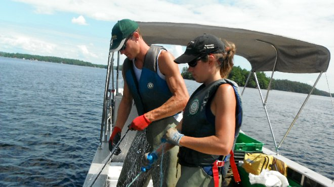 Fisheries crews will be monitoring fish populations this summer on 11 lakes in Greater Sudbury, as well as taking water samples and checking for invasive species.