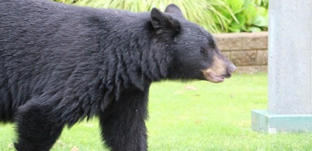 Northern Ontario Bear Management Association Members Upset with MNRF Process