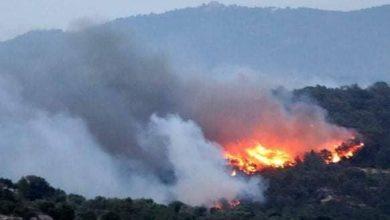 الحرائق تستمر في الإجهاز على غابات جهة الشمال 4