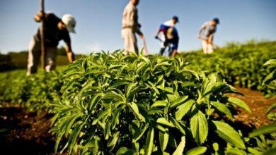 توقعات بإنتاج أزيد من 770 ألف طن من الخضروات بجهة طنجة 3