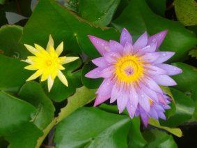 Lotus-RK math Kadapa