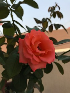 flower_nature