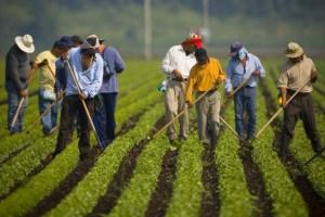 Moins d'immigrants permanents, plus de travailleurs étrangers temporaires