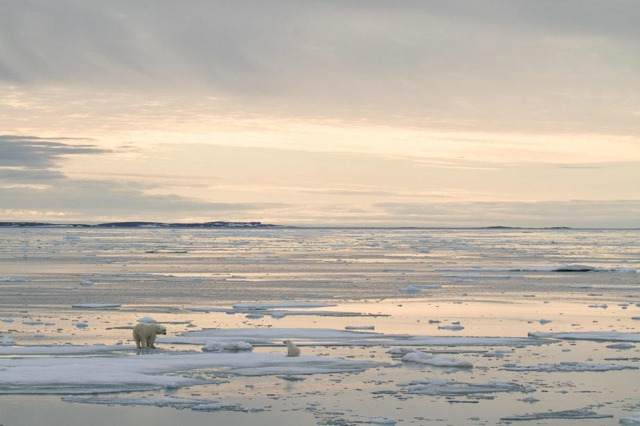 Arctique: record de chaleur dans un archipel norvégien
