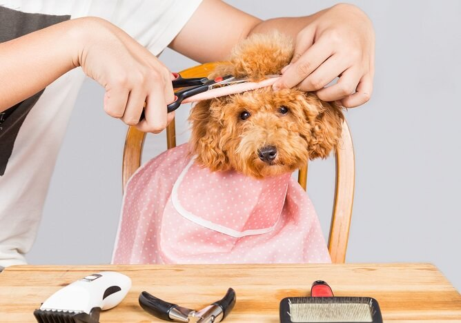 Dog Grooming Tips For Professional Grooming