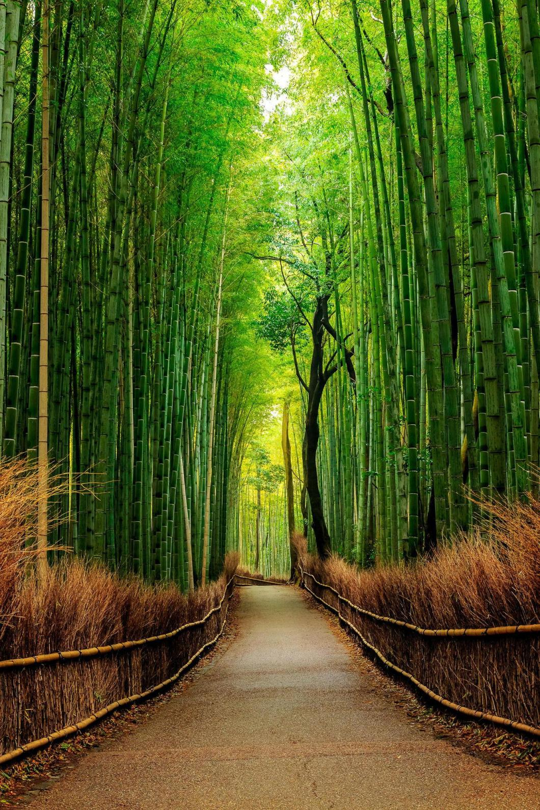 Hd Wallpaper Bamboo Forest Bestpicture1org