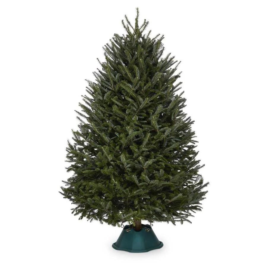 Shop 7 8 Ft Fresh Fraser Fir Christmas Tree At