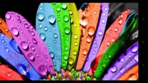 Color Representation_Panasonic T21