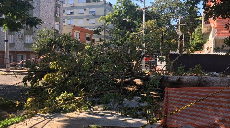 Árvore na Rua Jaime Telles