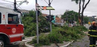 Queda de árvore Avenida Dom Pedro I Vila Monumento