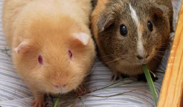 guinea pigs beta testing Face Unlock and in-display fingerprint readers