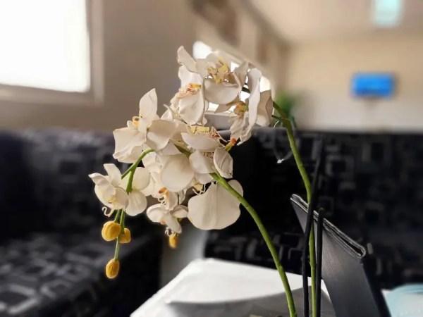 Oppo f11 pro 48 MP camera indoor plant