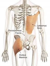 Pain in the Thoracic- Lumbar area area