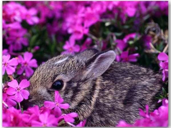Скачати шпалеру на телефон: Тварини, Квіти, Кролики ...