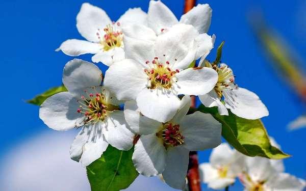 Скачать картинку на телефон: Растения, Цветы, бесплатно ...
