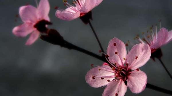 Скачати шпалеру на телефон: Рослини, Квіти безкоштовно. 47000.