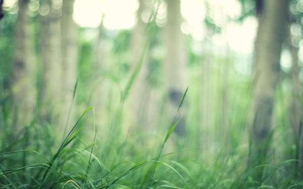Скачать картинку на телефон: Растения, Трава, Фон ...