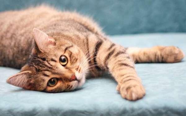 Скачать картинку на телефон: Животные, Кошки (Коты, Котики ...