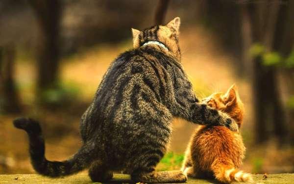Download Bilder für das Handy: Tiere, Katzen, kostenlos. 30386