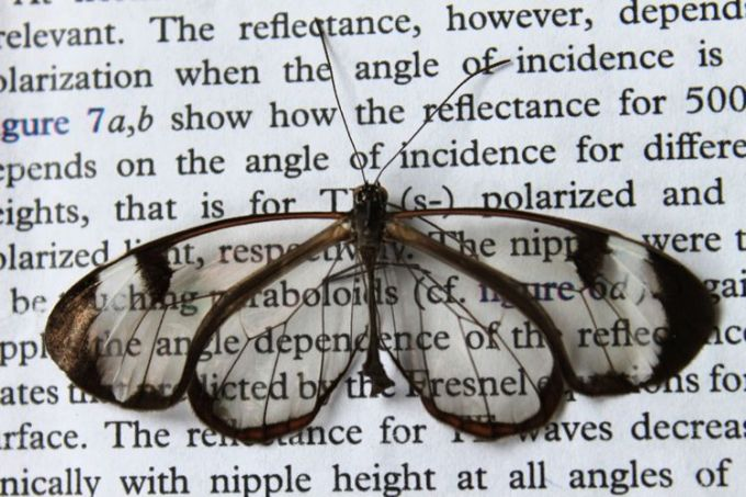 antyrefleksyjna-struktura-skrzydel-motyla