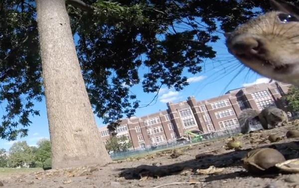Co się stanie, gdy wiewiórka ukradnie GoPro?