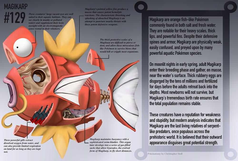 #129 Magikarp - anatomia