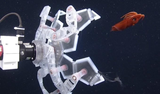 ramię robota (RAD sampler) łapiące ośmiornicę