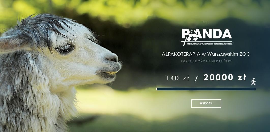 Alpakoterapia w warszawskim ZOO (PANDA)