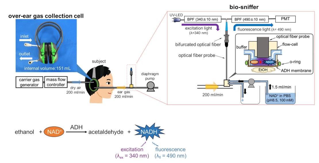 Schemat systemu pomiaru etanolu opartego na nausznikach