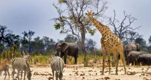 largest mammal