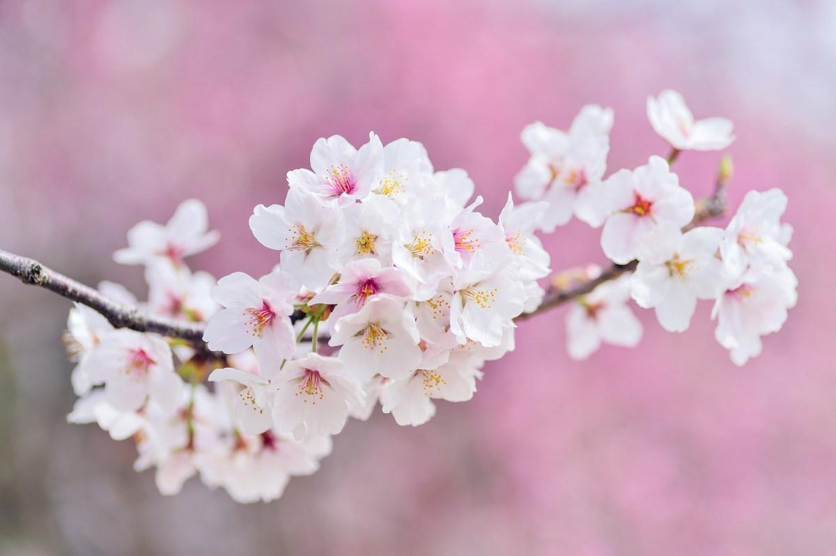 『注目!!!』 2019年(31年度) 福山市 成人式の開催日時が今年から変更??