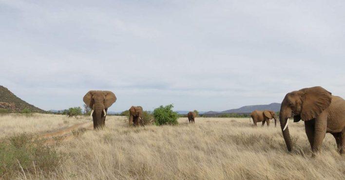 elefantes en Kenia - viajar a África
