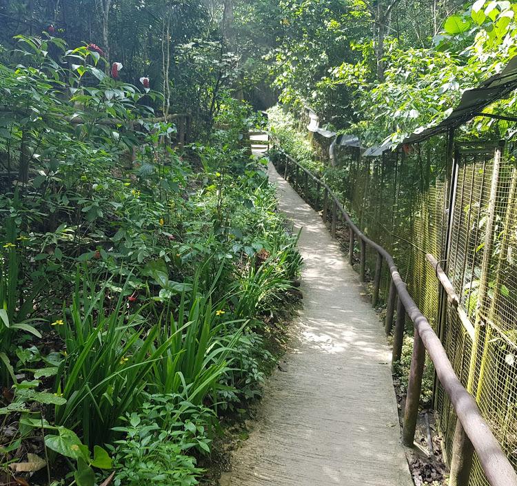 Lugar donde se encuentran los tarsier en Bohol Filipinas. Enjaulados