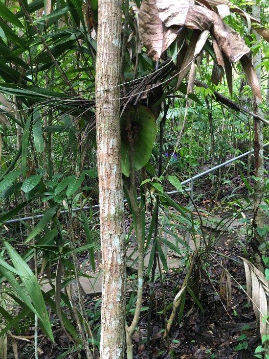 Escondite para los tarseros en el Santuario de Bohol